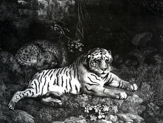 Two Tigers, 1788