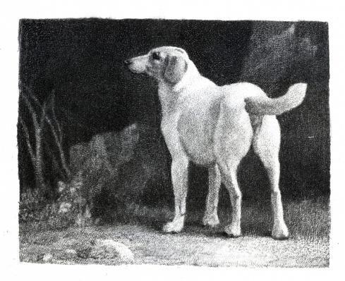 Dog, 1788