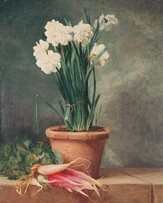 Narcissus and Radishes