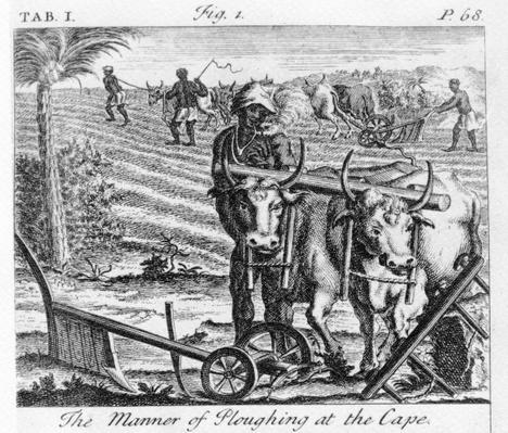 The Manner of Ploughing at the Cape, an illustration in 'The Present State of the Cape of Good-Hope: vol II', published 1731