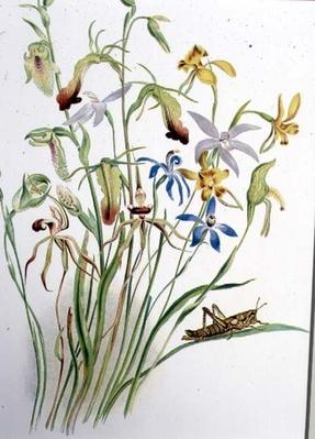Iris and Blue Speedwell