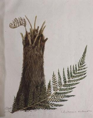 Study of a Fern, 19th century