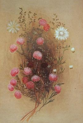 Melaleuca or Flannelflower, 19th century