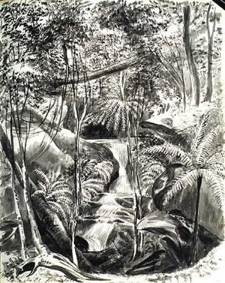 Jungle Study, 19th century