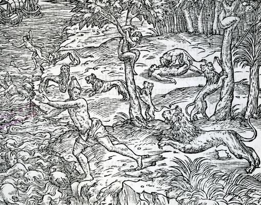 Lions attacking and eating humans, illustration from 'Les singularites de la France antartique' by Andre Thevet, published 1558