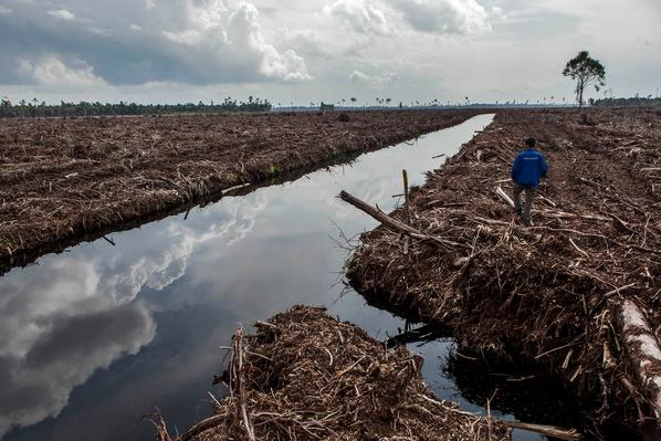 Indonesia's Deforestation Rate Becomes Highest In The World | Human Impact on the Physical Environment | Geography