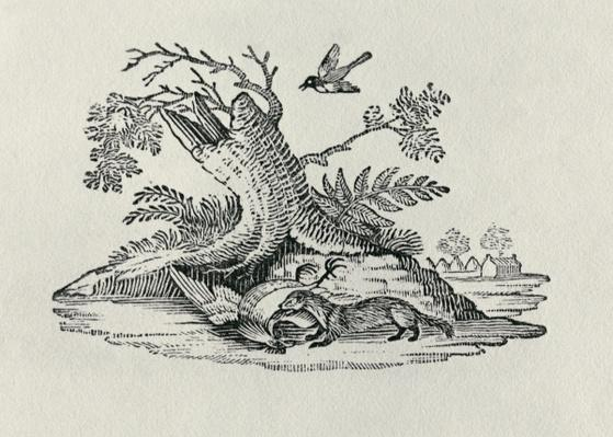 A Civet with a Cockerel from 'History of Quadrupeds', 1790