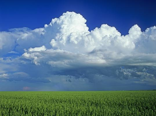 Wheat field with a cumulonimbus cloud mass | Weather