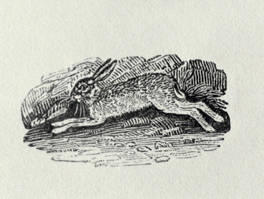 The Hare from 'History of British Birds and Quadrupeds'