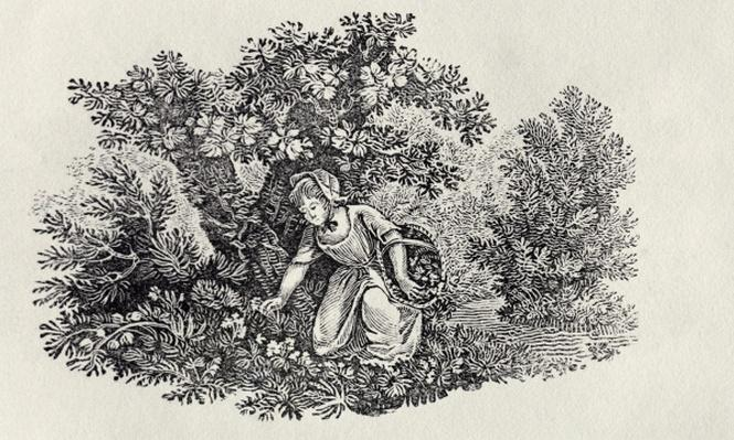 A Girl Gathering Flowers from 'History of British Birds and Quadrupeds'