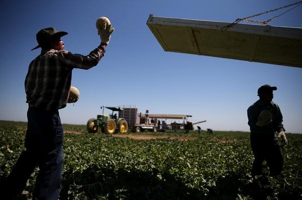 California Central Valley Farming Communities Struggle with Drought | Agriculture and Forestry