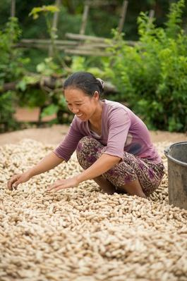 Woman Working During Peanut Harvest, Burma | Earth's Resources