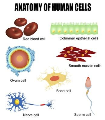 Anatomy of human cells | Science and Technology