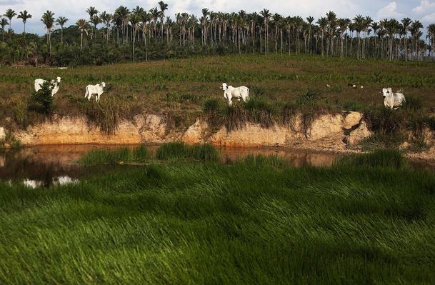 Deforestation In Brazil's Amazon Skyrockets After Years Of Decline | Human Impact on the Physical Environment | Geography