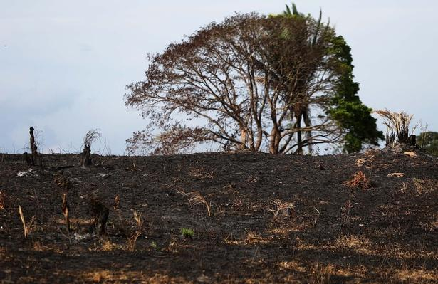 Deforestation In Brazil's Amazon Skyrockets After Years Of Decline   Human Impact on the Physical Environment   Geography