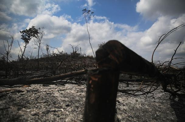 Quilombo Residents Threatened By Ranching And Logging In Brazil's Amazon   Human Impact on the Physical Environment   Geography
