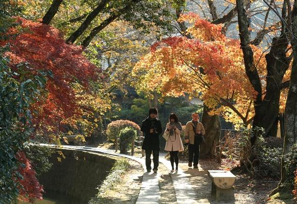 People Enjoy Autumn Colors In Kyoto | Weather