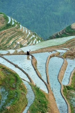 China, Guangxi Province, Longsheng, rice terraces at Longji | Human Impact on the Physical Environment | Geography