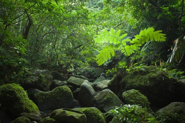 Light through rainforest canopy, Iriomote Island | Animals, Habitats, and Ecosystems