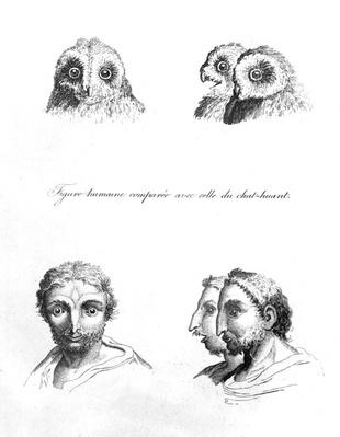 Similarities between the Head of a Barn Owl and a Man, from 'L'Art de Connaitre les Hommes', vol. 10 by Johann Lavater, engraved by Pierre Nicolas Ransonnette, published 1806