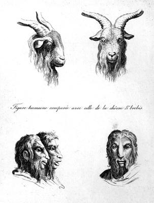 Similarities between the head of a Goat and a Man, from 'L'Art de Connaitre les Hommes', vol. 10 by Johann Lavater, engraved by Pierre Nicolas Ransonnette, published 1806