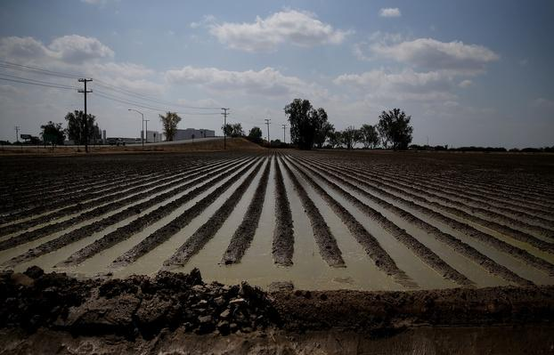 California's Central Valley Heavily Impacted By Severe Drought | Agriculture and Forestry