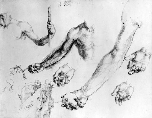 Studies for the arm of Adam, 1504