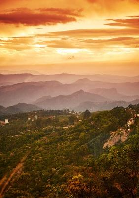 Tea Plantation Valley at Mystical Orange Sunset in India | Earth's Surface