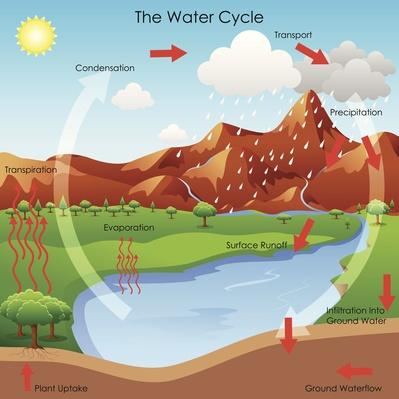 Water Cycle | Earth's Surface