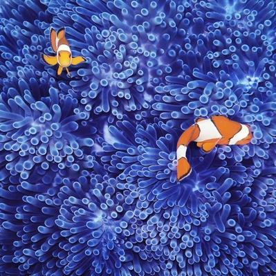 Clown Fish | Animals, Habitats, and Ecosystems
