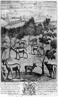 The deer fraying their heads, from 'The Gentleman's Recreation' published by Richard Blome, 1686