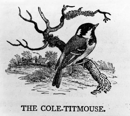 The Cole-Titmouse, illustration from 'The History of British Birds' by Thomas Bewick, first published 1797