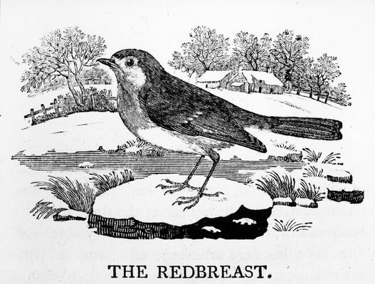 The Redbreast, illustration from 'The History of British Birds' by Thomas Bewick, first published 1797