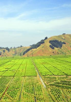 Rwanda: A Tea Plantation Covers a Valley | Earth's Surface