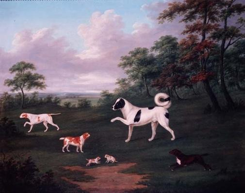 Sporting dogs in a landscape