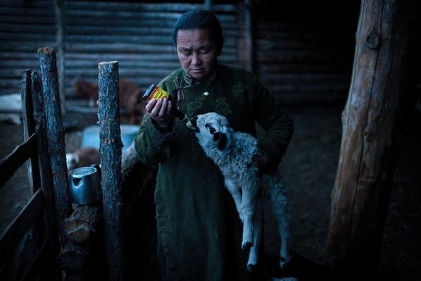 Feeding a Baby Lamb | Global Oneness Project