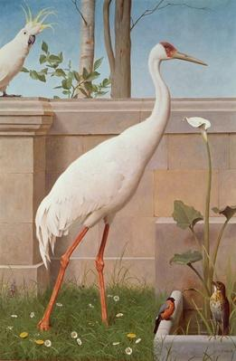 Indian Crane, Cockatoo, Bullfinch and Thrush