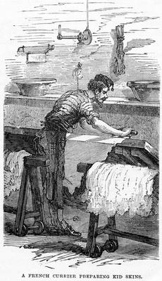 A French Currier Preparing Kid Skins