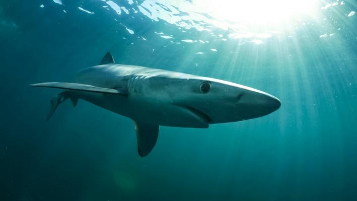 Reflections on the Ocean and Blue Shark | Ireland's Wild Coast