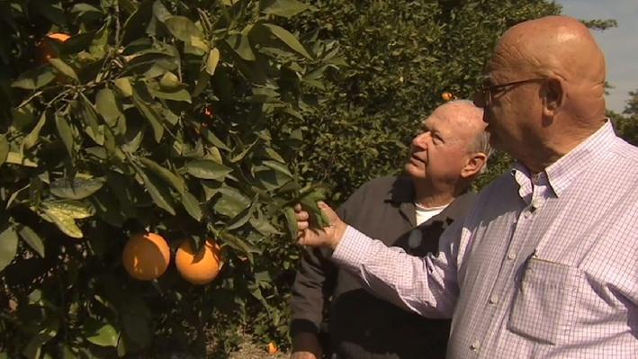 Family Citrus Farm   America's Heartland