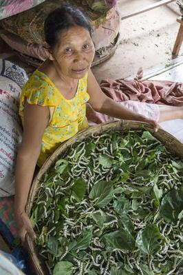 Woman Holding Basket of Silk Worms | Earth's Resources