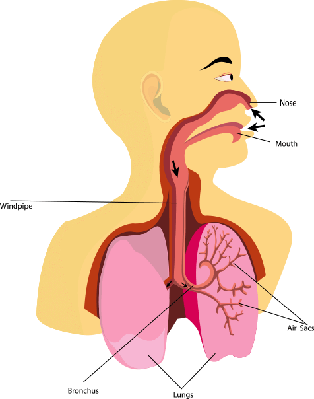 Breathing, | Science and Technology
