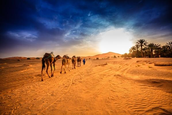Morocco, Sahara desert, Camel caravan going to dune in desert | Animals, Habitats, and Ecosystems