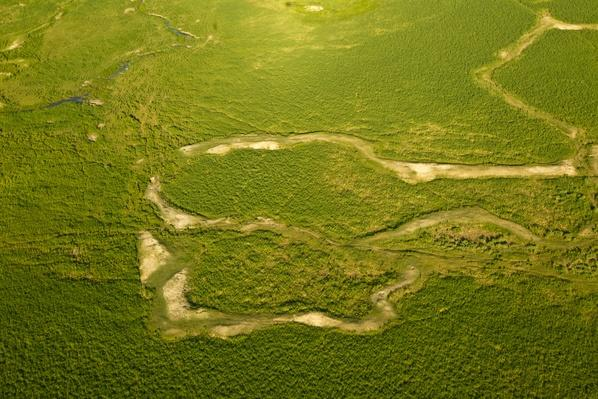 The Okavango Delta, With Fresh Growth After the Floods | Earth's Surface