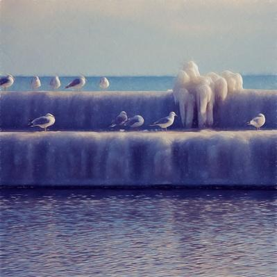 Ice and Seagulls on the Breakwall | Earth's Surface