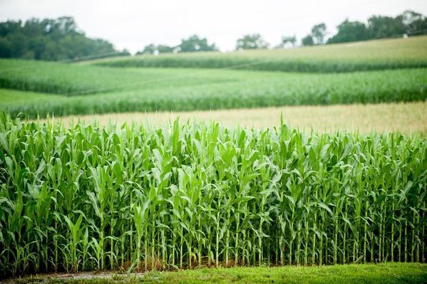 USA Delta Pennsylvania, Corn Field | Earth's Resources