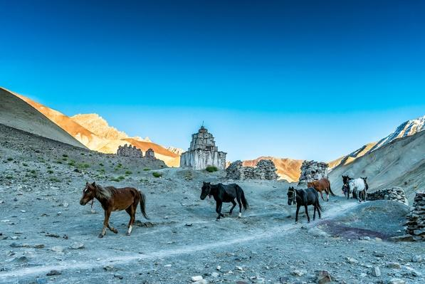 Horses in Rumbak | Earth's Resources