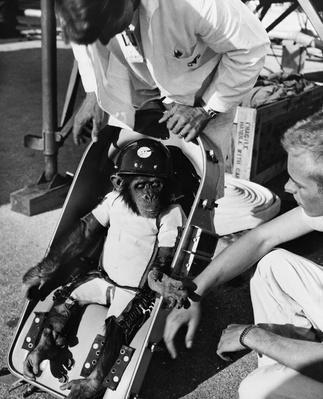 Ham the Chimp, First Hominid in Space | NASA Missions and Milestones in Space Flight