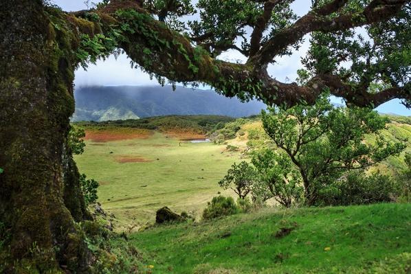 Portugal, Madeira, Laurel Tree on Fanal Plateau | Earth's Surface