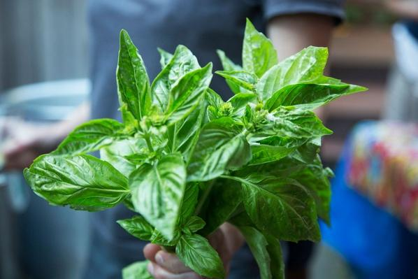 Bunch of Basil | Earth's Resources